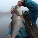 Дневник рыбака  03 11 2010 Судачек и толстолоб на спиннинг
