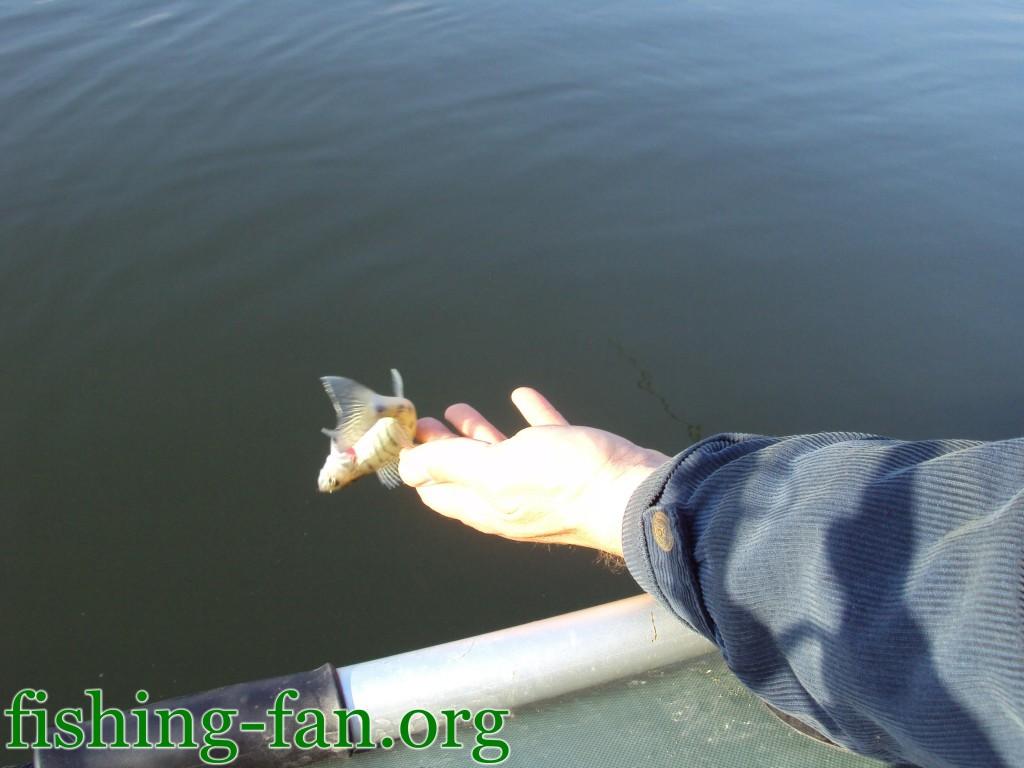 рыбалка на Курахово