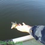 Дневник рыбака 16 11 2010 Судак, окунь и красноперка на микроджиг