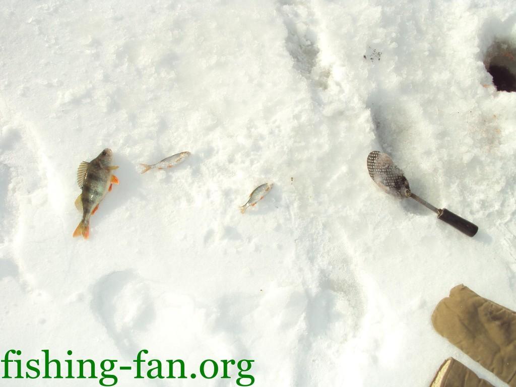 ловля окуня зимой, ловля плотвы зимой
