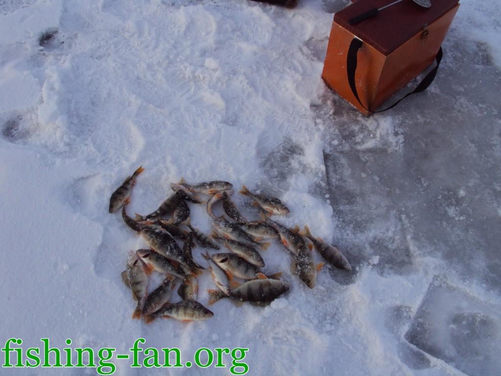 ловля окуня зимой в Донецке