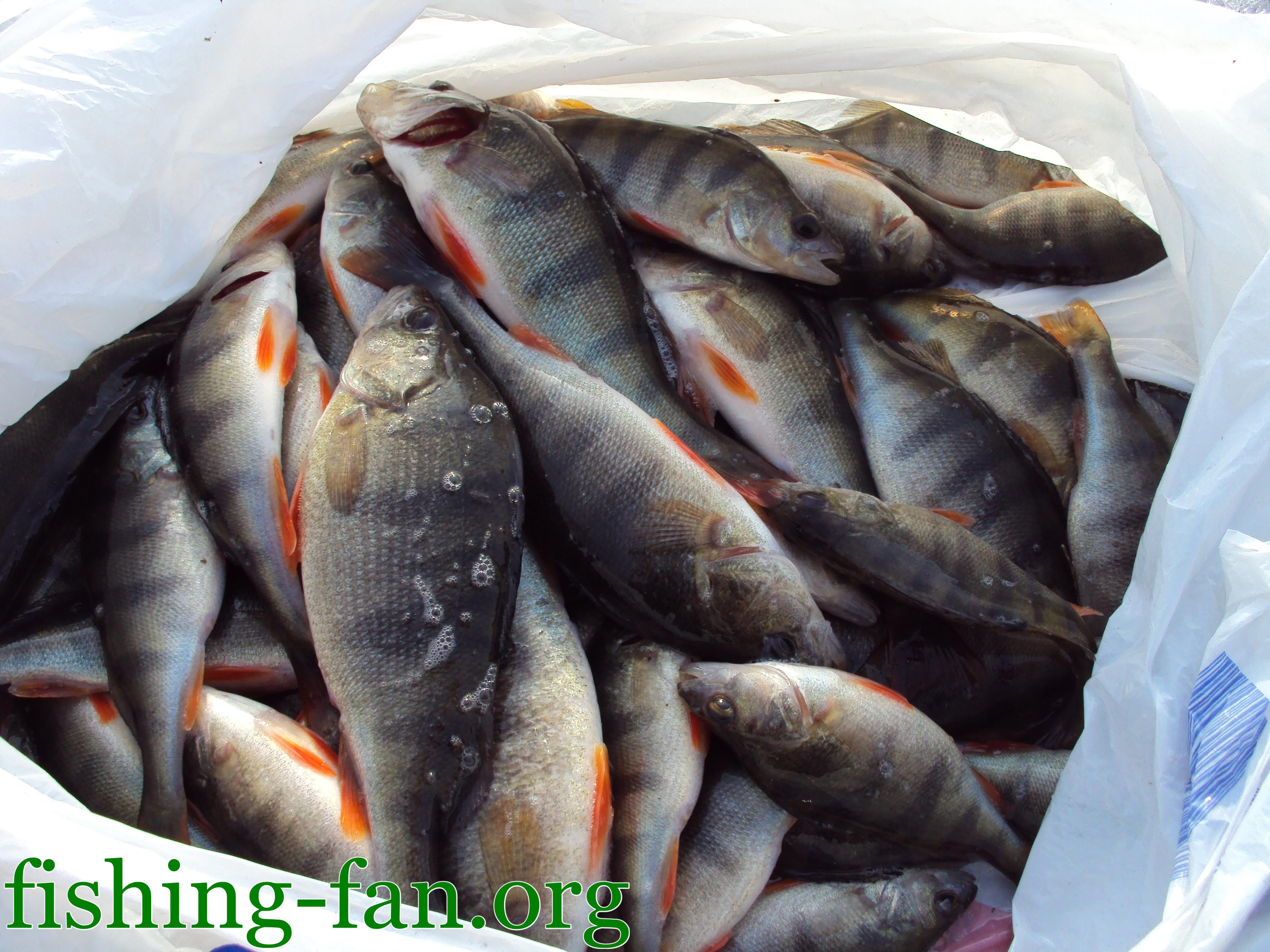 Прогноз клева рыбы в наб.челнах
