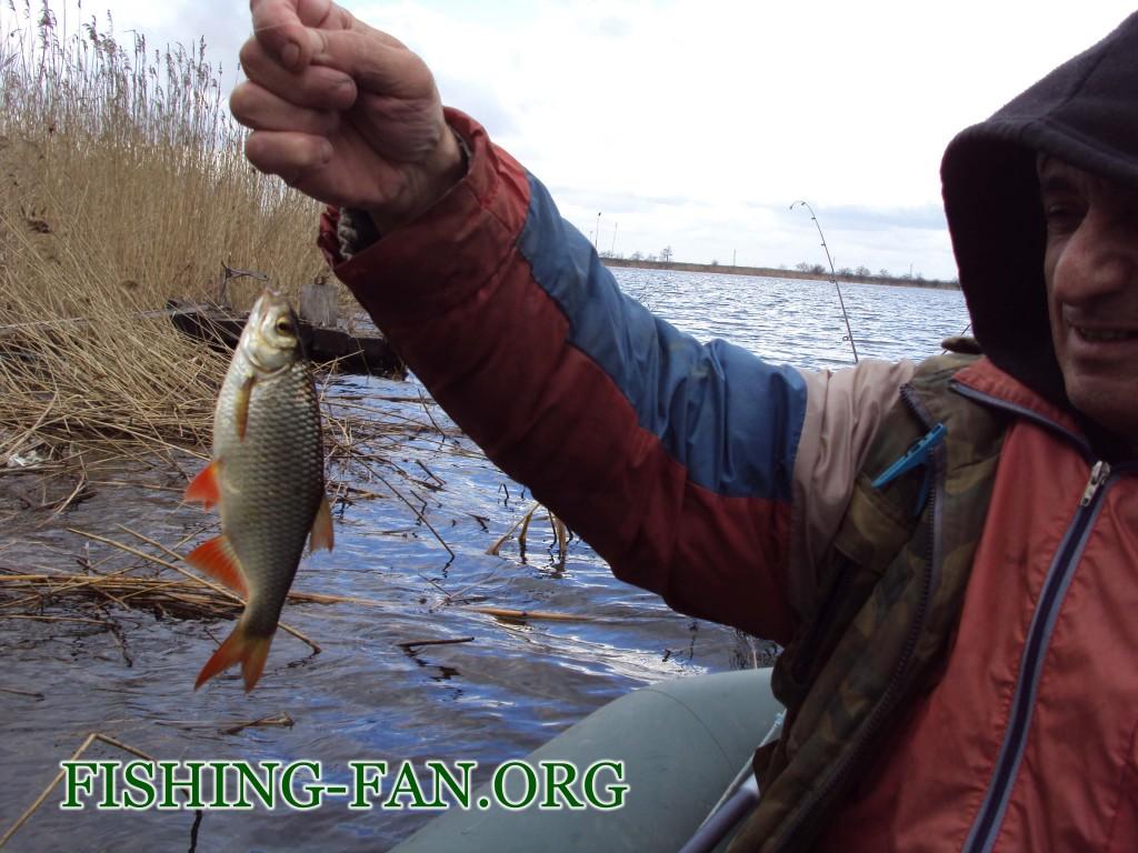 ловля красноперки весной в Донецкой области