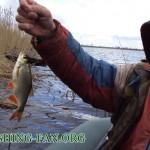 Дневник рыбака 12 04 2011. Снова нарвались на стаю отличных красноперок.