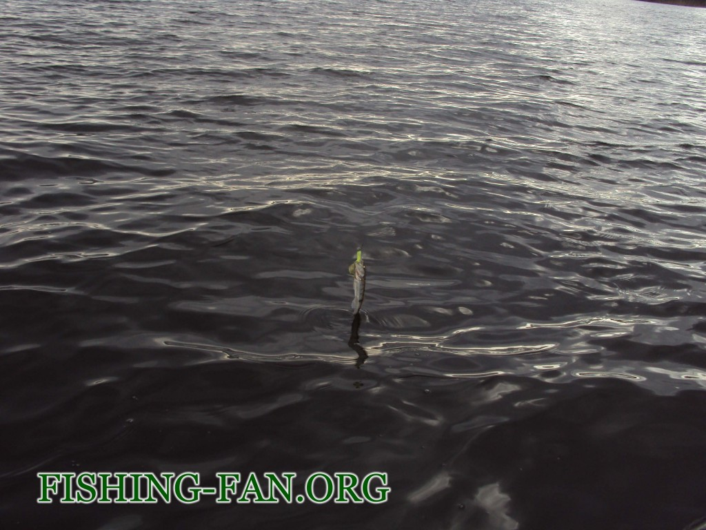ловля судака на спиннинг в Донецке