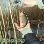 ловля красноперки весной в Донецке