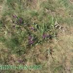 природа на стыле весной