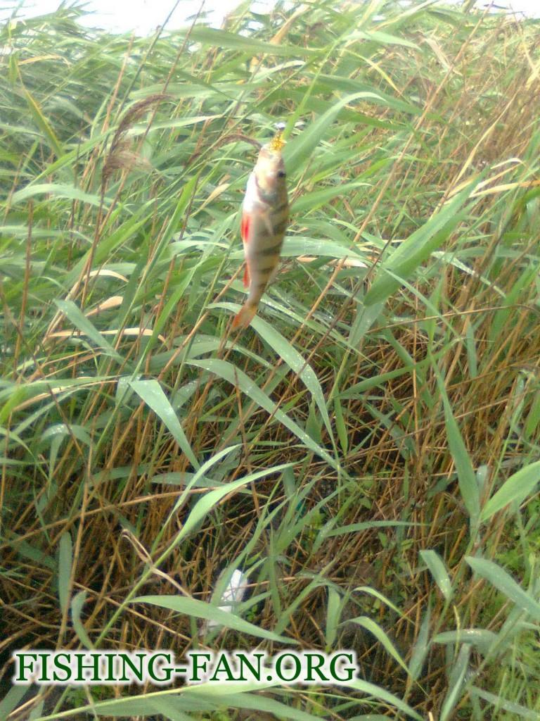 рыбалка летом  на борисовке