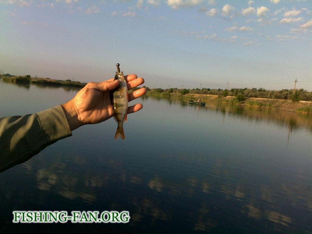 ловля окуня в Донецкой области