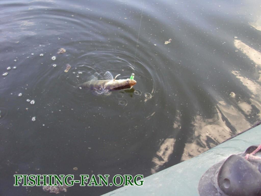 ловля судака на спиннинг летом