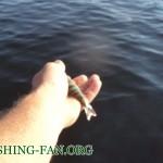 Дневник рыбака 24 06 2011г. Рыбалка летом на чистой воде. Могло быть и лучше.