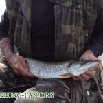 Щука - вид рыбы, которую можно ловить на спинннг