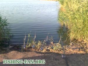 ловля белой рыбы в Донецкой области