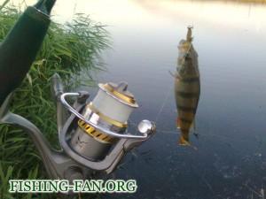 Рыбалка летом на спиннинг на окуня