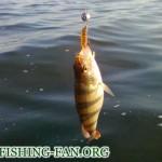 Дневник рыбака 02 07 2011г. Ловля на спиннинг в середине лета в Донецкой области