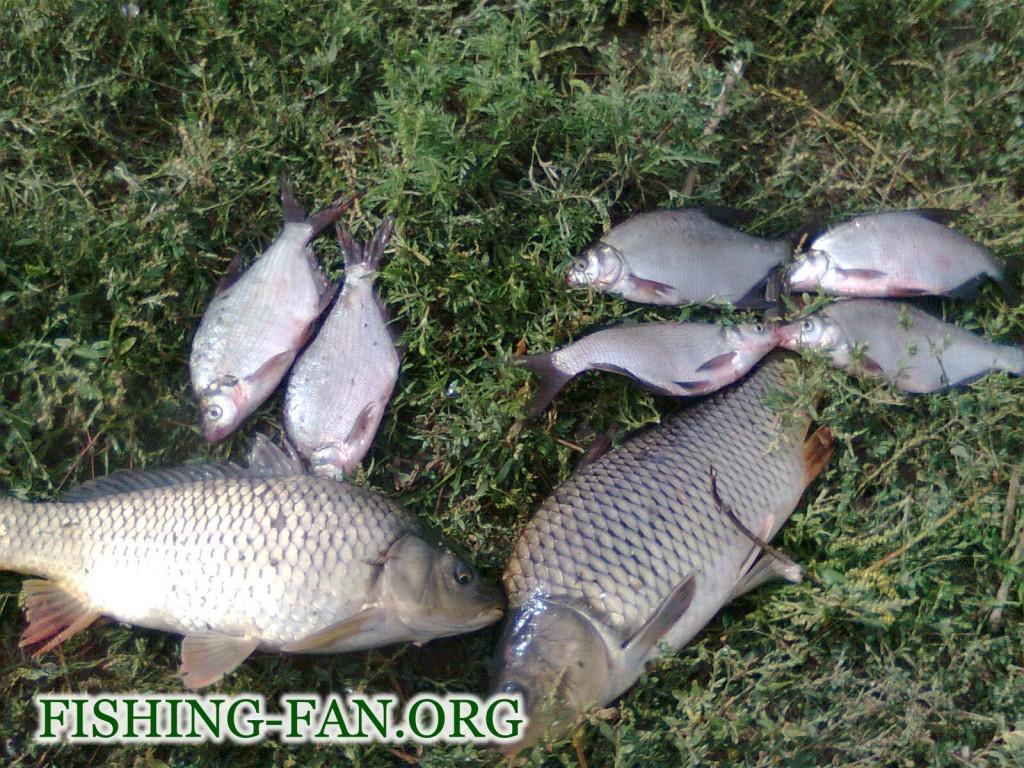 рыбалка на макушатники летом в Донецкой области