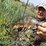 Дневник рыбака 14 08 2011. Ловля щуки на р.Волчья. Рыбалка на спиннинг в конце лета.