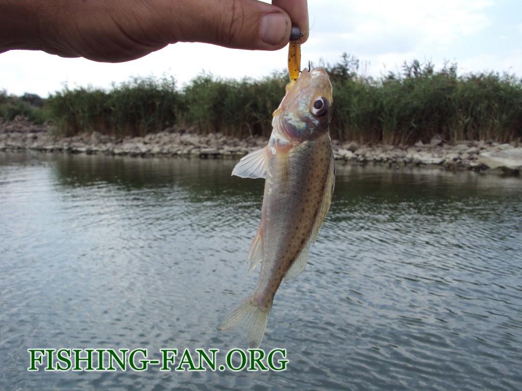 рыбалка осенью на спиннинг в Донецкой области