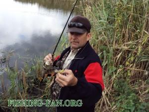 ловля окуня осенью на спиннинг на речке