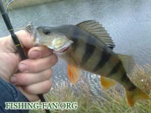 рыбалка осенью клев окуня на реке сухие ялы
