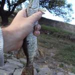 Дневник рыбака 01 10 2011. Рыбалка осень, ловля щуки на спиннинг в Донецкой области