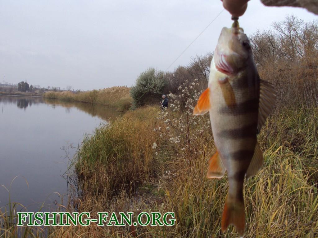 рыбалка осенью клев окуня на реке мокрые ялы