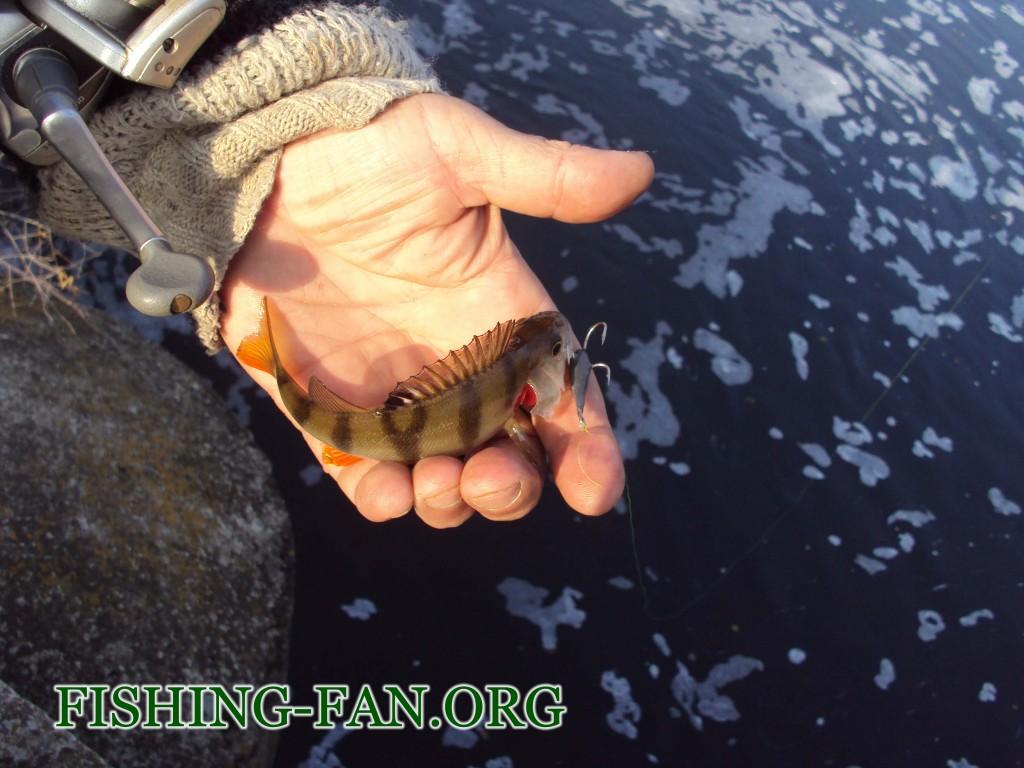 ловля окуня поздней осенью в Донецкой области