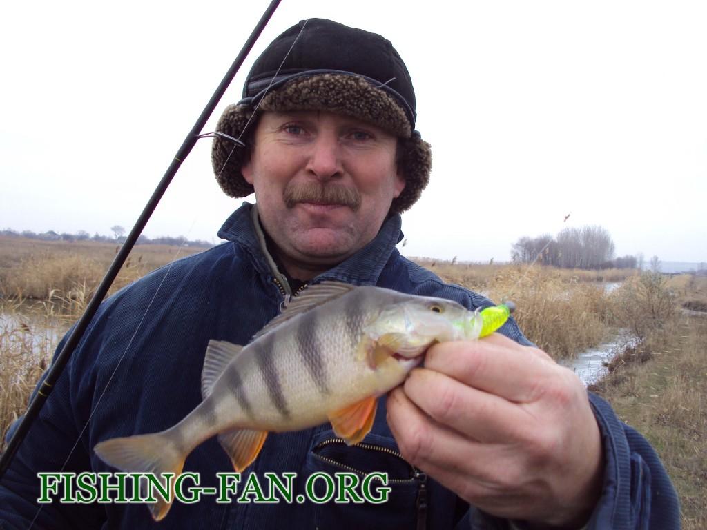 крупный окунь в начале зимы на спиннинг рыбалка в декабре