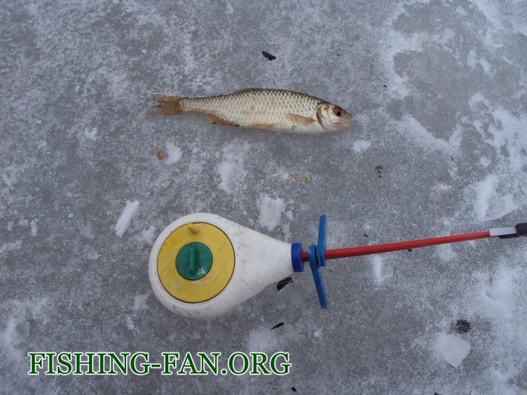 как ловить красноперку зимой на мормышку