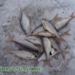 Дневник рыбака 18 02 12 г. Ловля Красноперки зимой на мормышку. Рыбалка на р.Волчья в Донецкой облас...