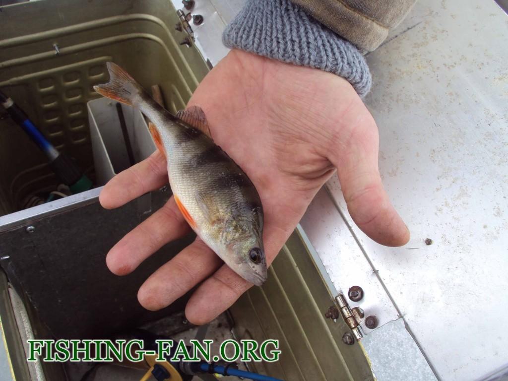 зимняя рыбалка ловля окуня на мормышку в Марьинском районе