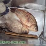 Дневник рыбака 27 02 12 г. Ловля карася зимой на мормышку в Донецкой области
