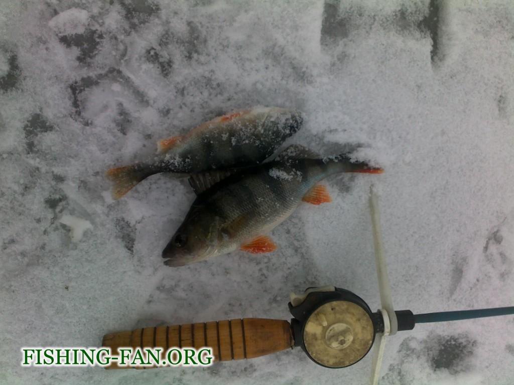 Ловля окуня зимой в Донецкой области