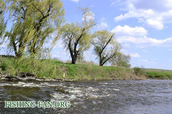 ловля голавля на спиннинг в Донецкой области
