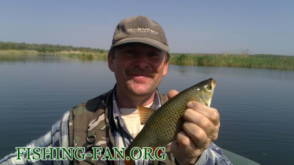 рыбалка весной крупная красноперка на спиннинг