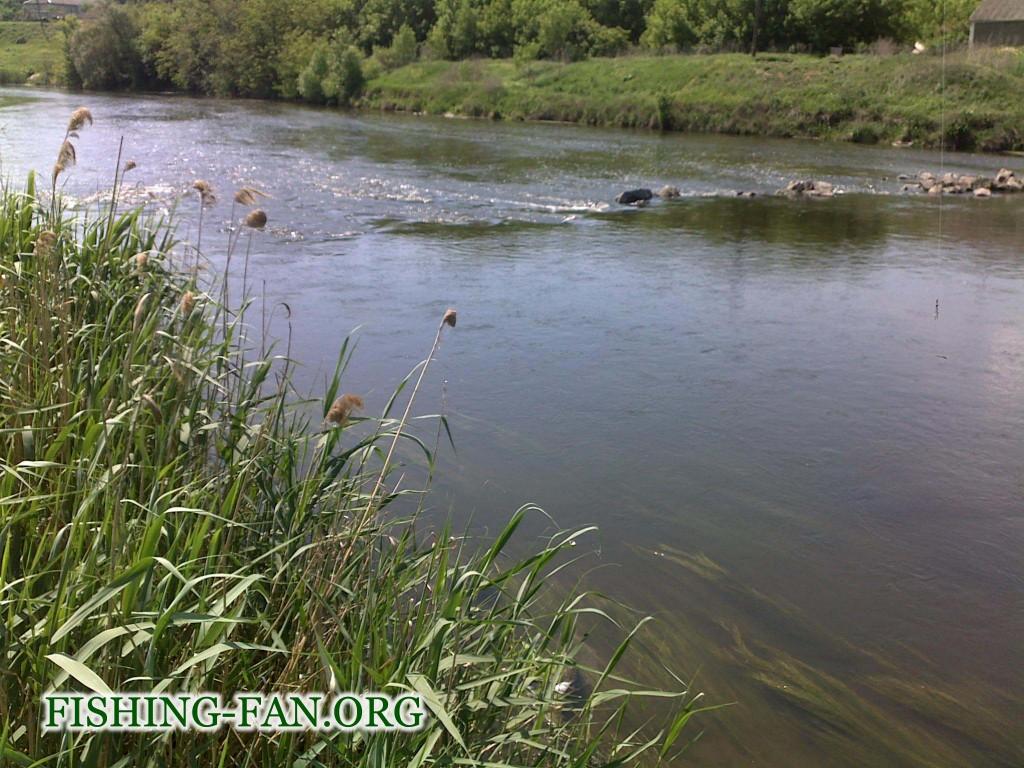 Ловля голавля на реках Донецкой области