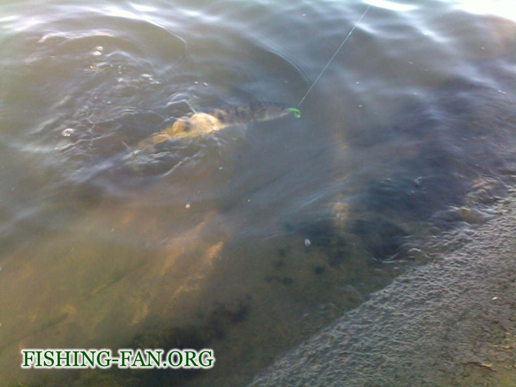 Ловля судака спиннингом на водоеме Георгиевский