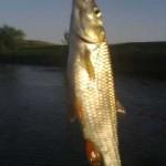 Дневник рыбака 19 05 12 г. Ловля голавля на реке Кальмиус.