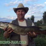 Дневник рыбака 29 06 12 г. Ловля щуки и судака на Курахово в конце июня.