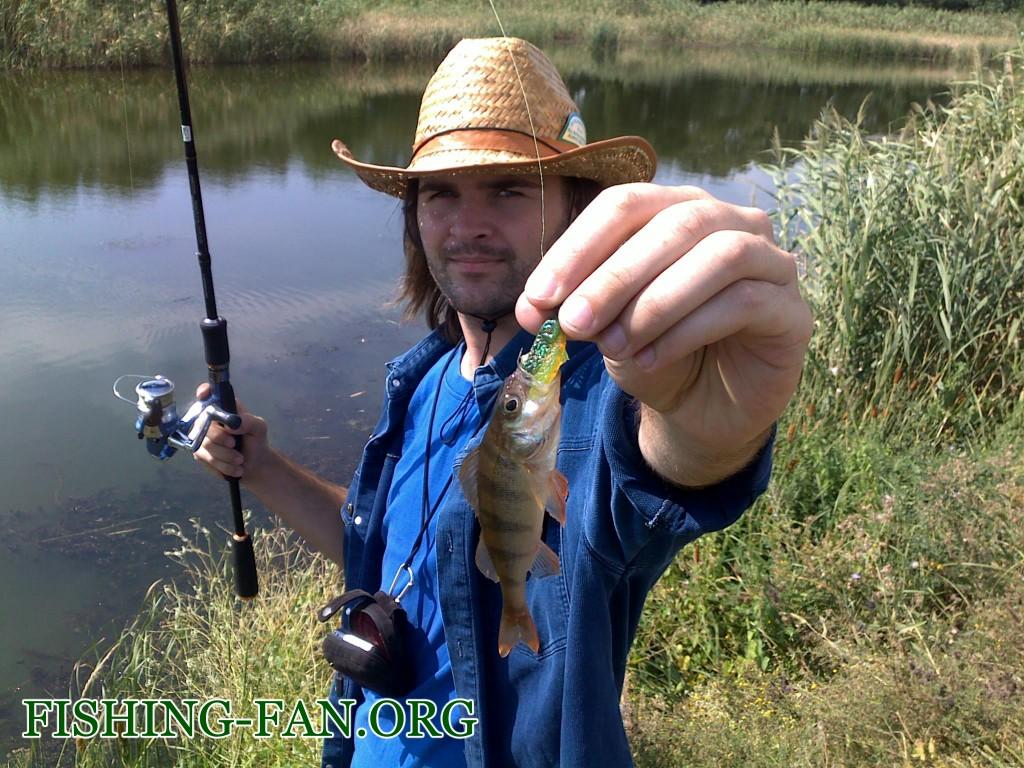 Ловля окуня спиннингом на реках Донецкой области