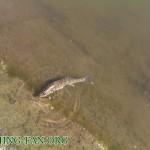 Дневник рыбака 15 08 12 г.  Куда поехать на рыбалку в предстоящие выходные?