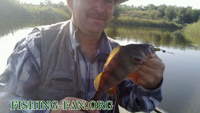 Ловля окуня спиннингом на реке Волчья