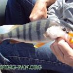 Дневник рыбака 18 08 12 г. Рыбалка на Николаевском водохранилище летом на спиннинг