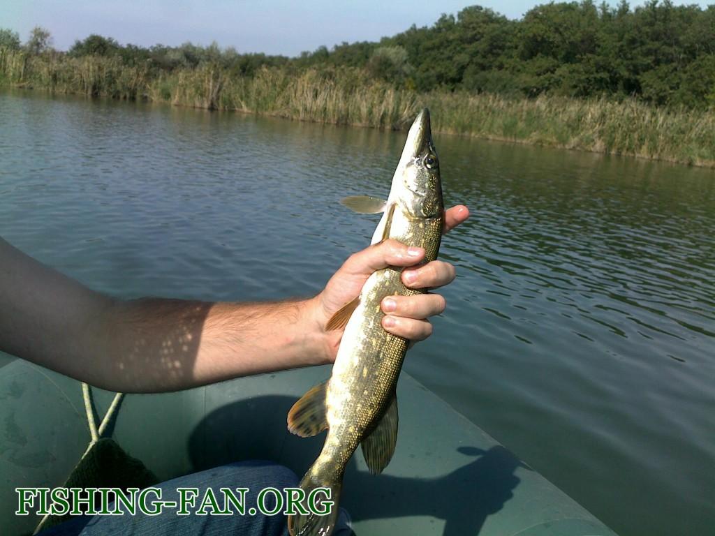 Рыбалка Осенью в Донецкой области щука на спиннинг на Карловке