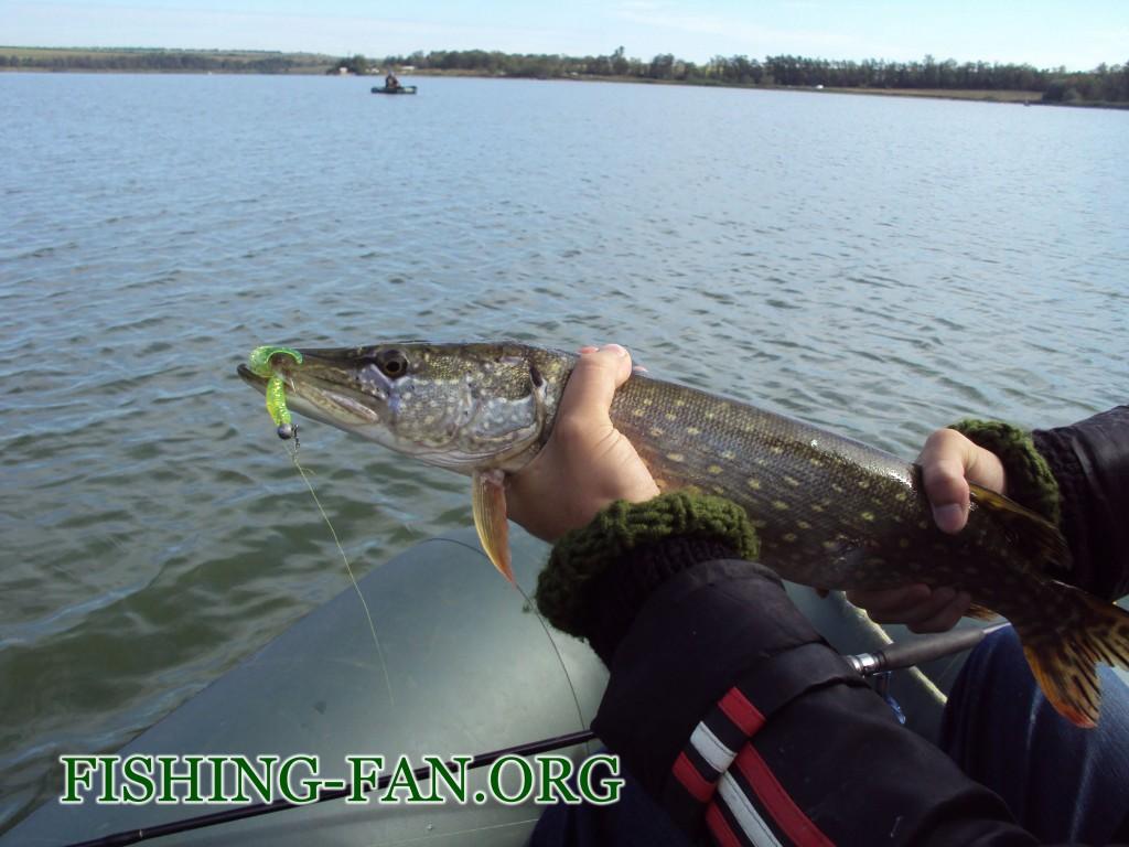 ловля щуки на спиннинг в начале осени