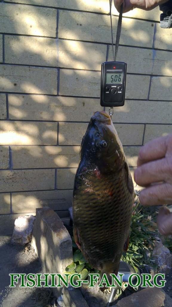Рыбалка осенью на спиннинг в Донецкой области. Ловля карпа.