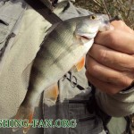Дневник рыбака 22 09 12 г . Ловля хищника на водоемах донецкой области.