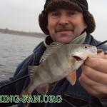 Дневник рыбака 25 11 12 г. Ловля крупного окуня и щуки на Курахово в конце ноября.