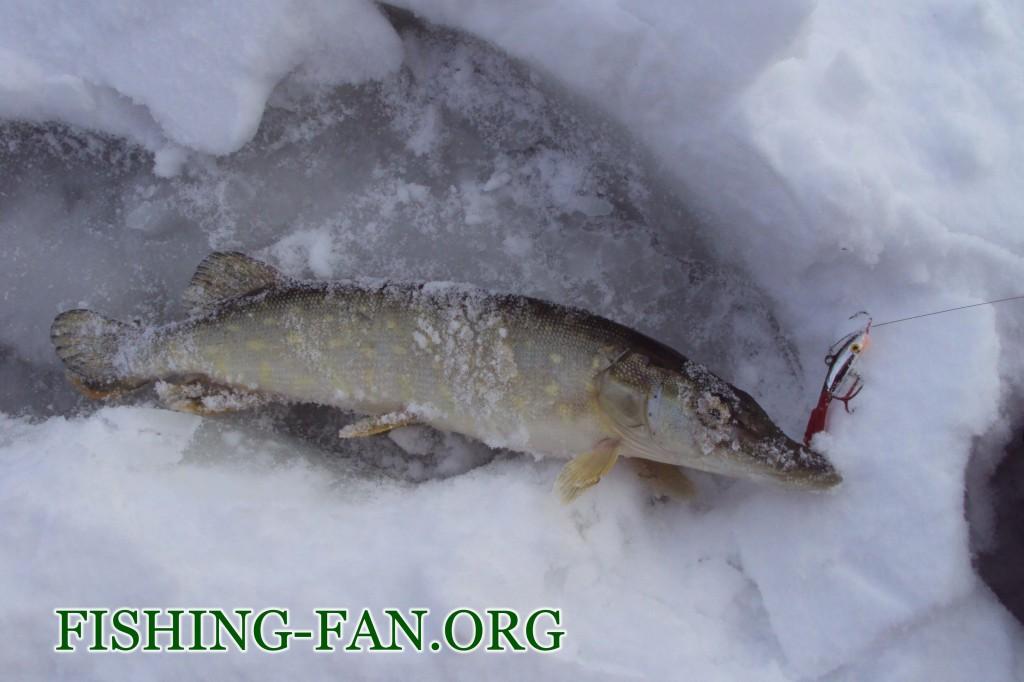Ловля щуки на балансир со льда в Донецкой области