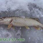 Дневник рыбака 09 01 13 г. Ловля щуки на балансир со льда на водоемах Донецкой области